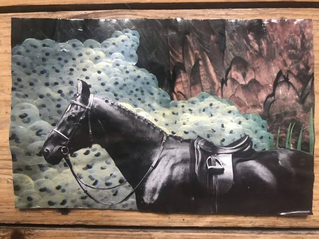 Hancut Collage with a horse from Frank Temme